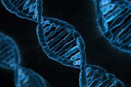 ADN stockage de données
