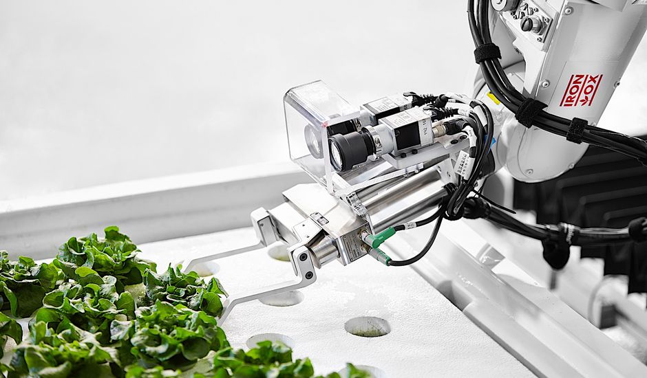 L'agriculture verticale pourrait sauver l'humanité