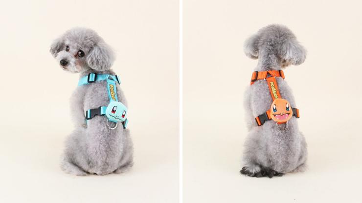 harnais pokemon carapuce salameche chien