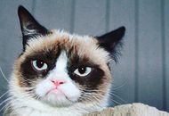 grumpy cat meme internet décédée