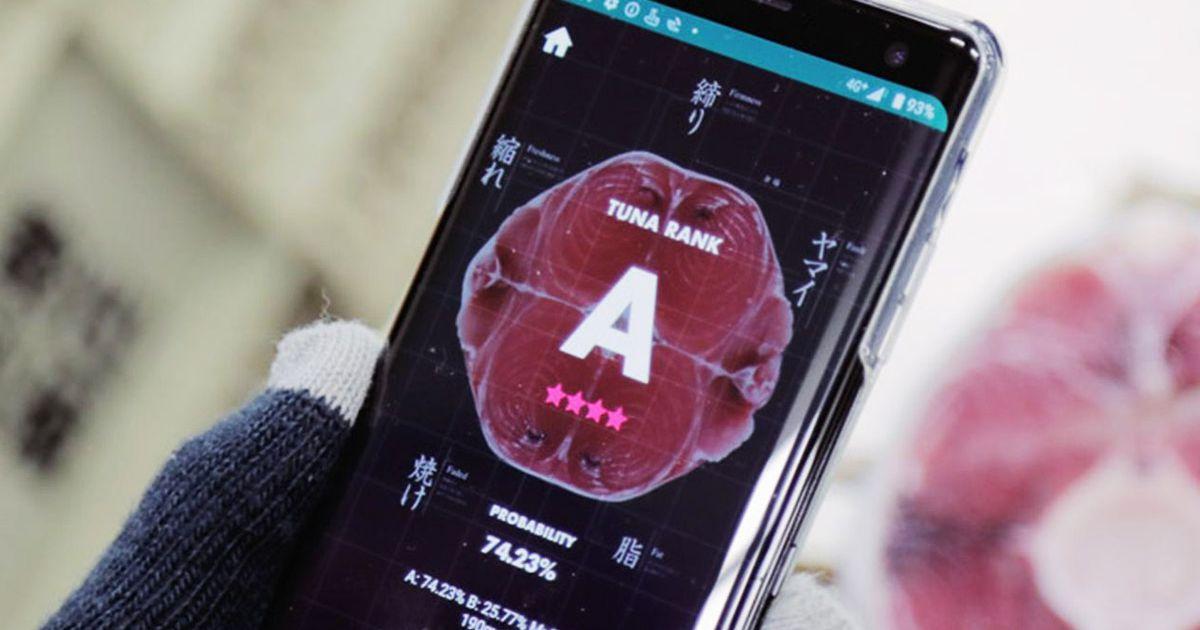 Tuna Scope, l'application qui utilise l'intelligence artificielle pour évaluer la qualité du thon