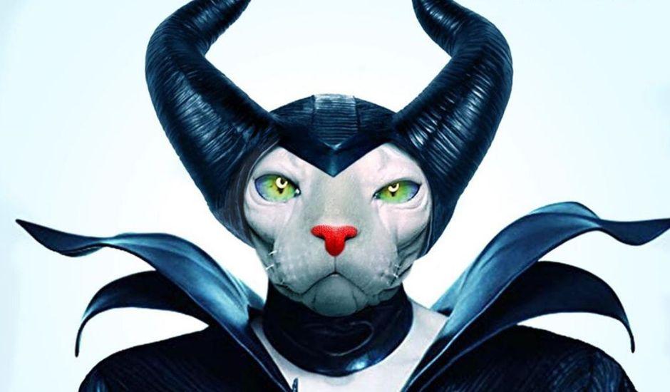affiches de films cultes parodiées avec un chat