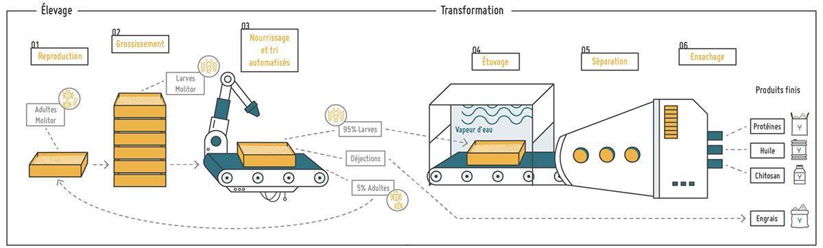 Schéma de la chaîne de production d'Ÿnsect.