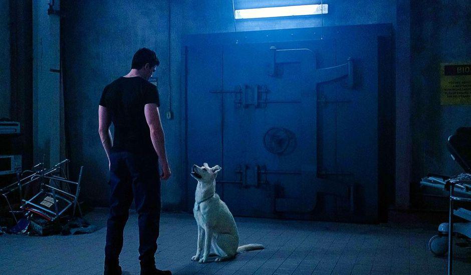 titans saison 2 aperçus de superboy et krypto