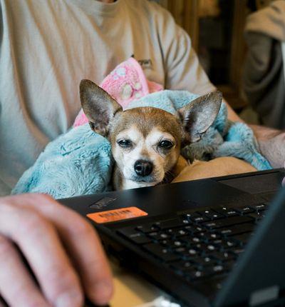 un employé en télétravail avec son chien
