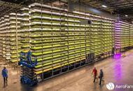 AeroFarms possède la plus grande ferme aéroponique au monde.