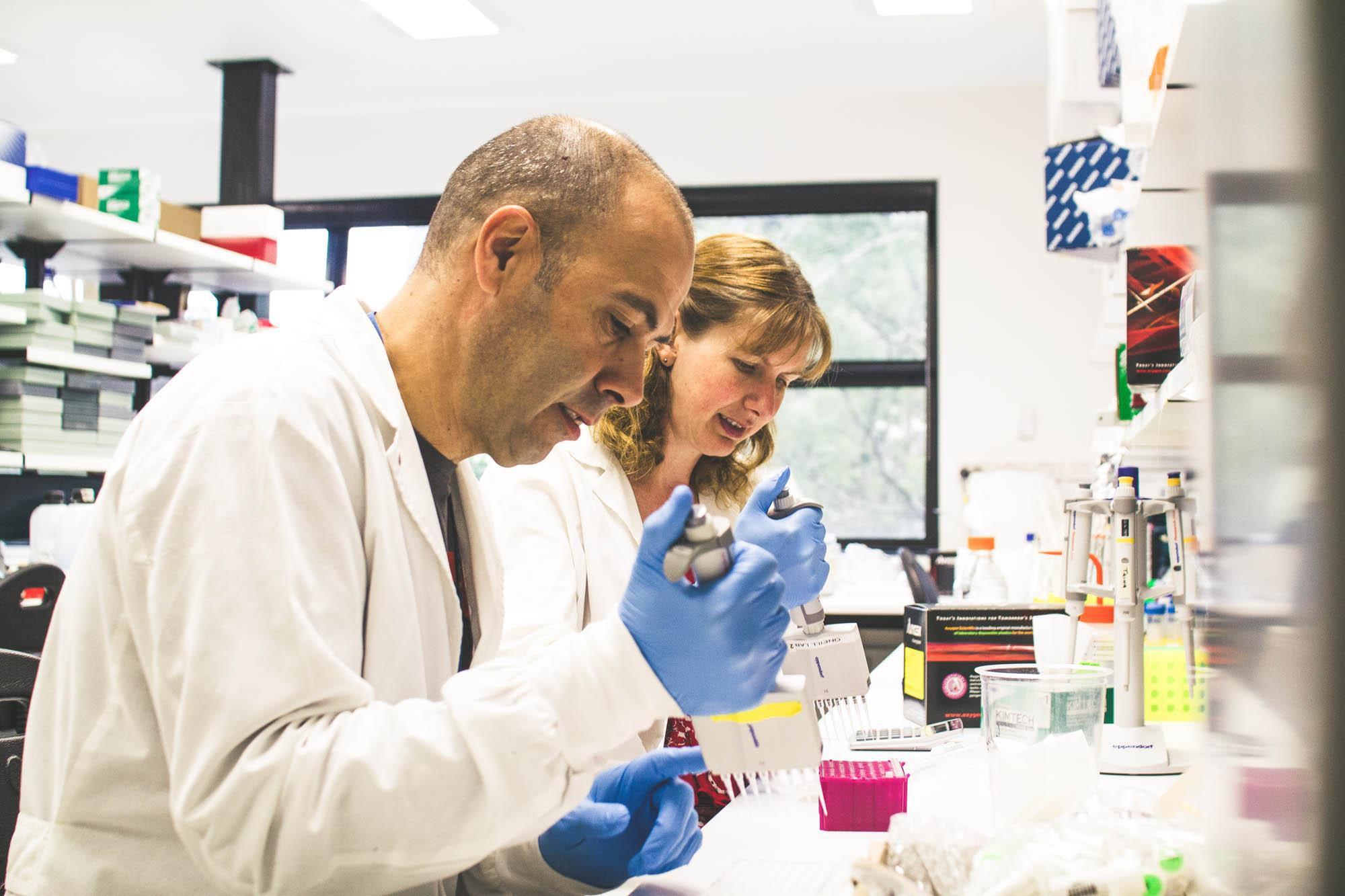 Des chercheurs travaillent sur la bactérie Wolbachia