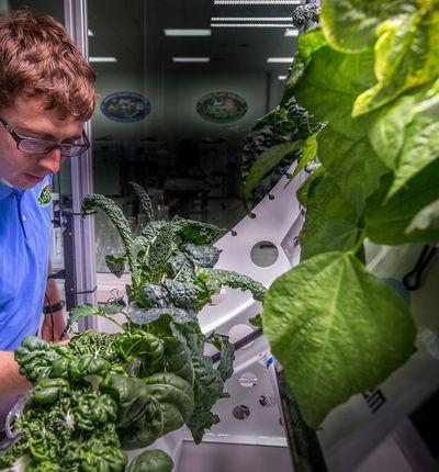 Les salades de l'espace sont aussi bonnes que celles qui poussent sur Terre.