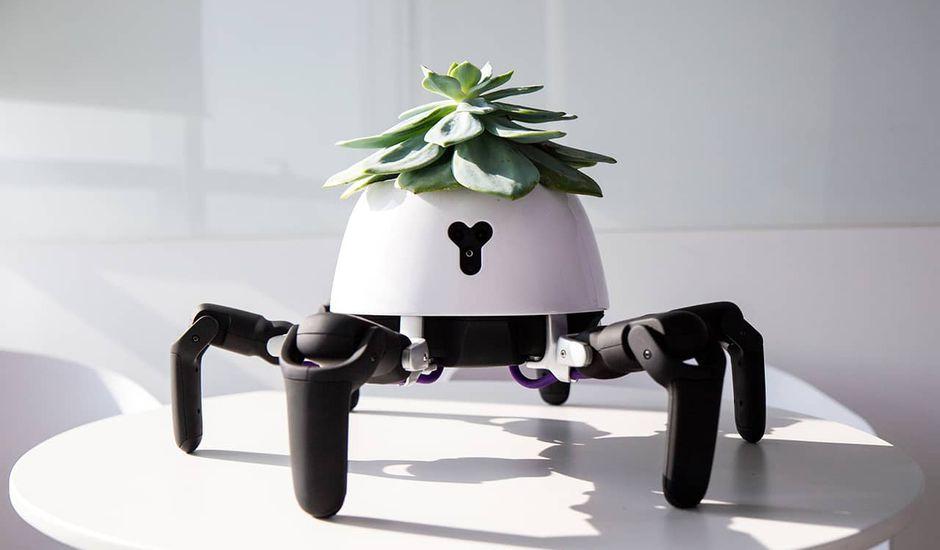 robot pot de fleur