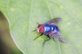 Les chercheurs de Harvard inventent un robot insecte autonome en énergie.