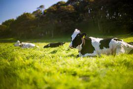 CRISPR s'intègre peu à peu dans l'agriculture