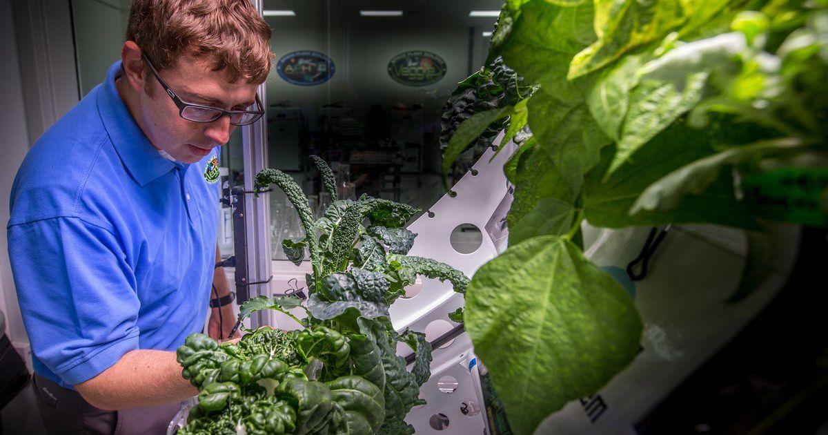 Les salades qui poussent à bord de l'ISS sont aussi savoureuses que sur Terre