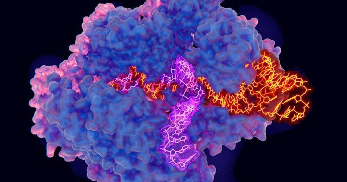 CRISPR est actuellement testé aux États-Unis pour guérir une forme de cécité