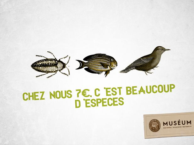 Chatons d'Or - Print - Quentin Delachaux (2)
