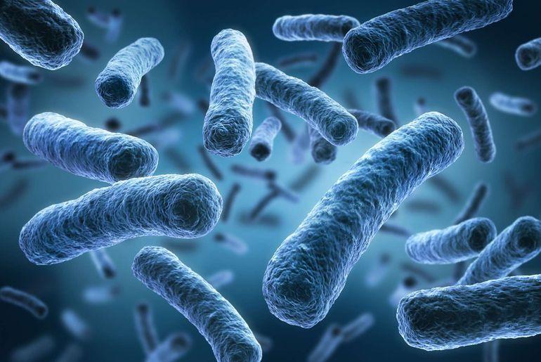 Nos capacités physiques pourraient être boostées par une bactérie