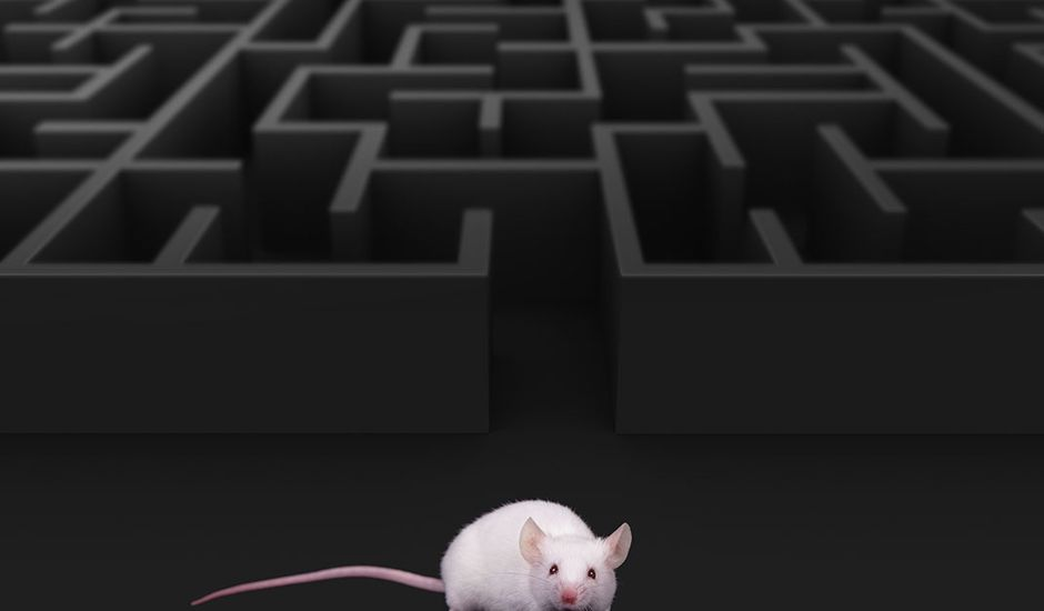 Un humain a pu contrôler un rat grâce à un implant