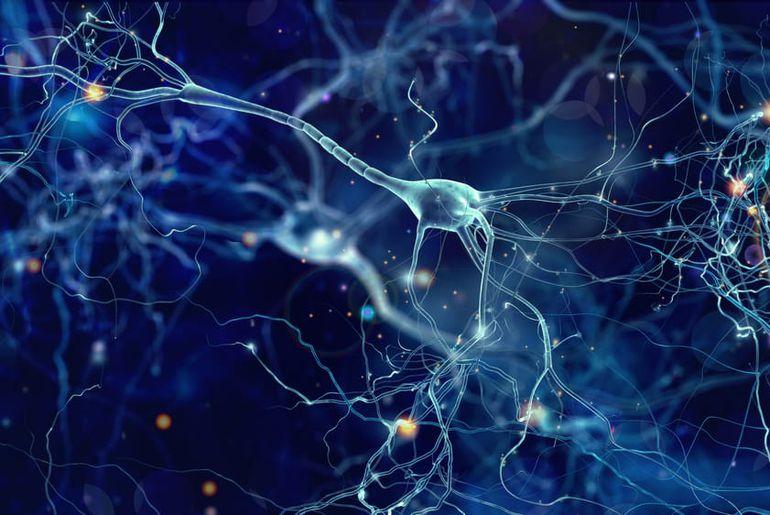 connectivité neuronale Alzheimer
