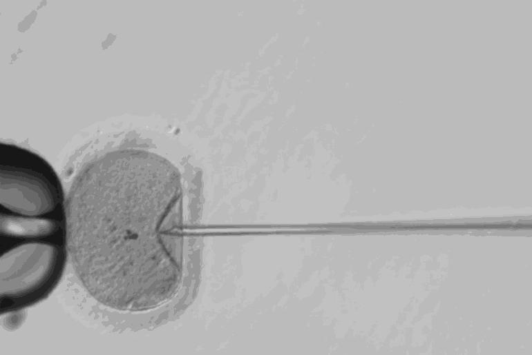 CRISPR embryons