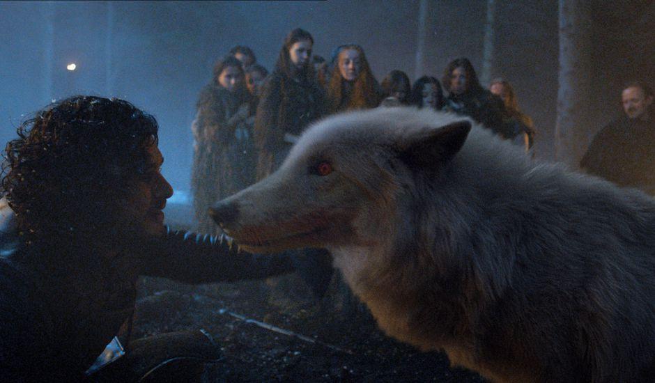 ghost loup géant de jon snow game of thrones