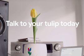 Google Tulip poisson d'avril