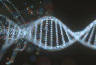 CRISPR pourrait avoir un impact sur la fonction cognitive humaine.