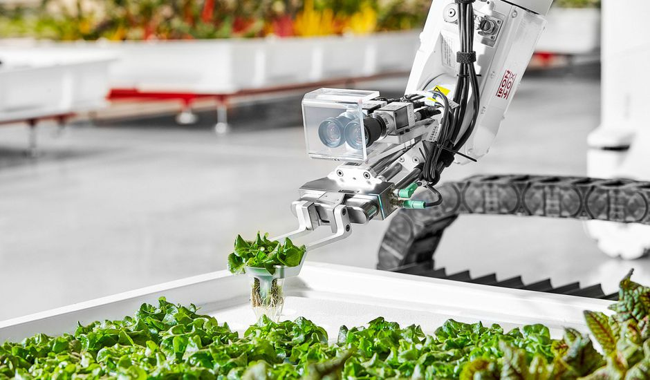 Un Transplanter Iron Ox en action