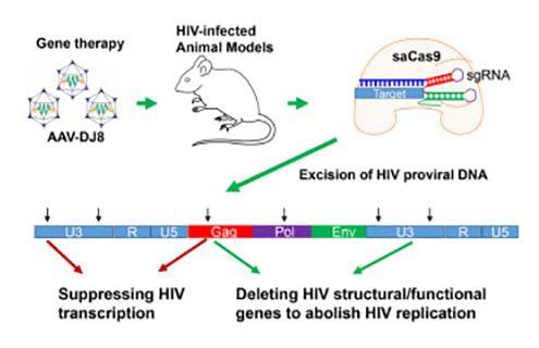 Crispr VIH