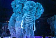Le cirque Roncalli utilise des hologrammes à la place de ses animaux