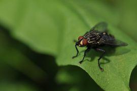 insectes armes miliaires par les états-unis