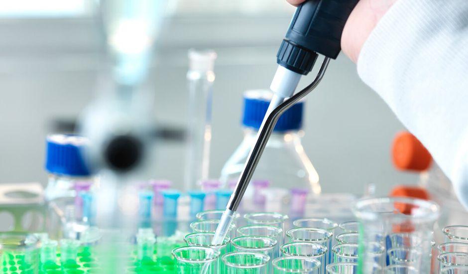 Le Japon autorise le plan de création d'humanimals des scientifiques