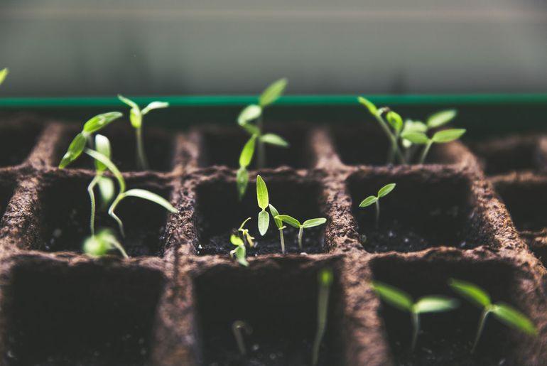 L'agriculture sur Mars semble désormais possible sur Mars grâce à une invention des chercheurs d'Harvard