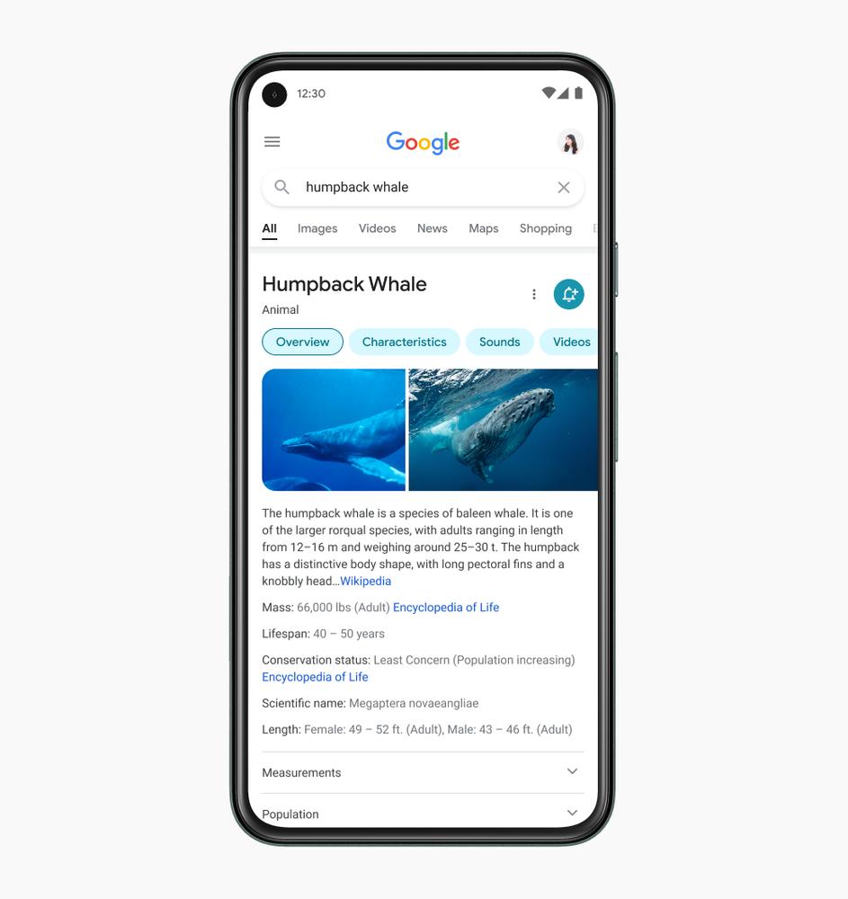 Interface Google Search Mobile