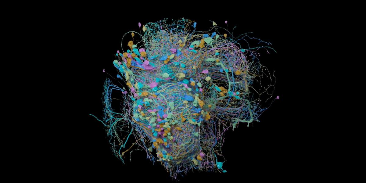 Google dévoile une carte 3D à haute résolution des connexions cérébrales