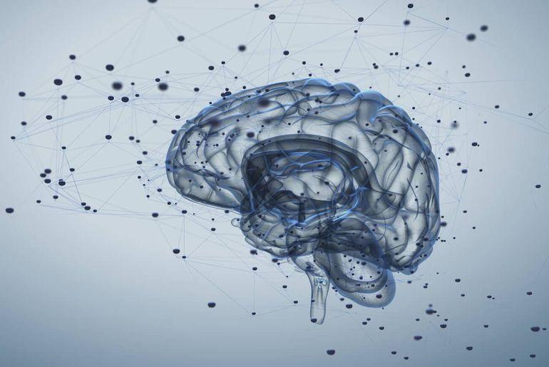 cerveau humain impact canabis
